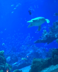 Lunch at Coral Reef