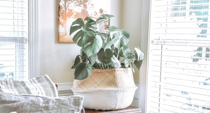 Houseplant Care Tips for Beginners with Verde Tribe